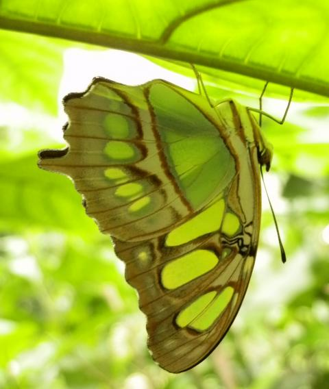 Papillon_1_1330280680.jpg