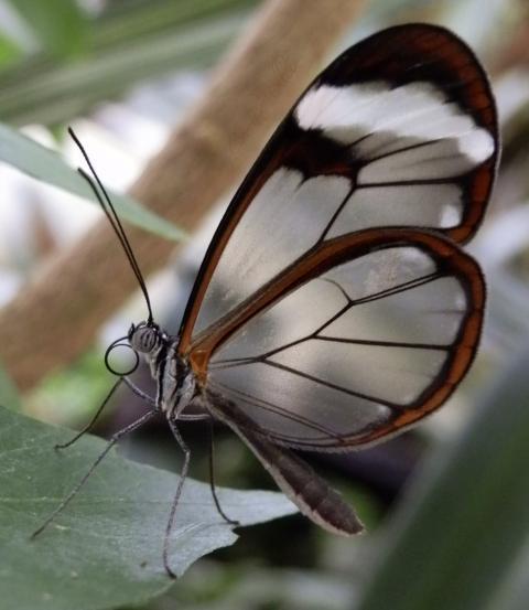 Papillon_2_1331062668.jpg